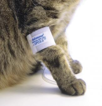 Blood pressure measurement in dogs and cats.